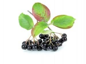 La baie d'aronia bio, un antioxydant naturel puissant